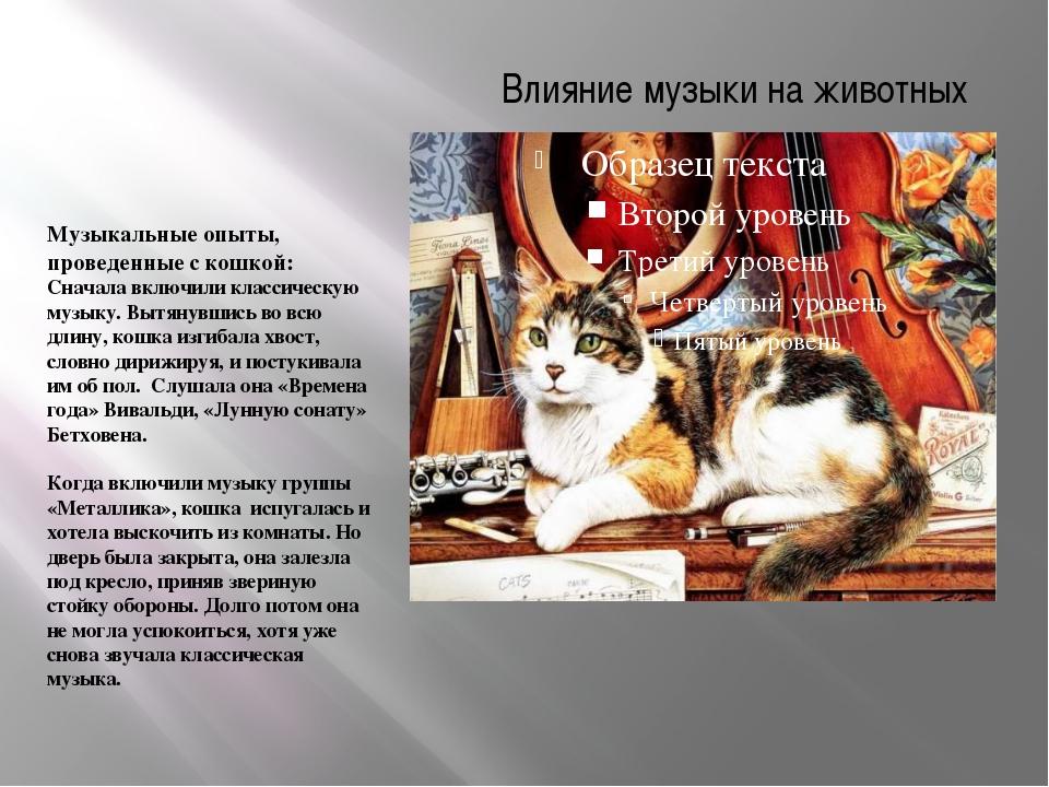 Влияние музыки на животных Музыкальные опыты, проведенные с кошкой: Сначала в...