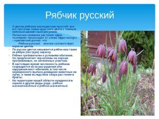 Рябчик русский У цветка рябчика околоцветник простой: все его листочки темно-