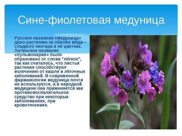 Сине-фиолетовая медуница Русское название «медуница» дано растению за обилие...