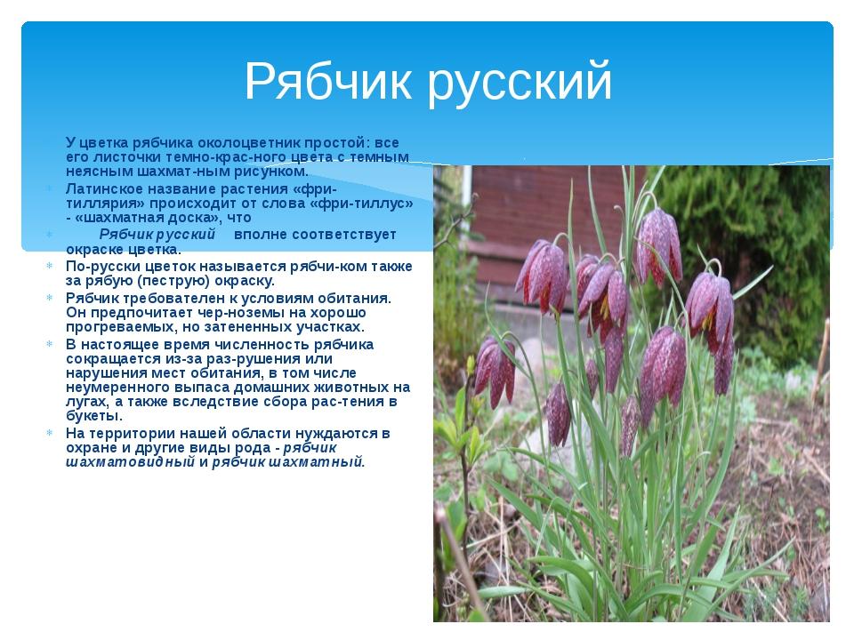 Рябчик русский У цветка рябчика околоцветник простой: все его листочки темно-...