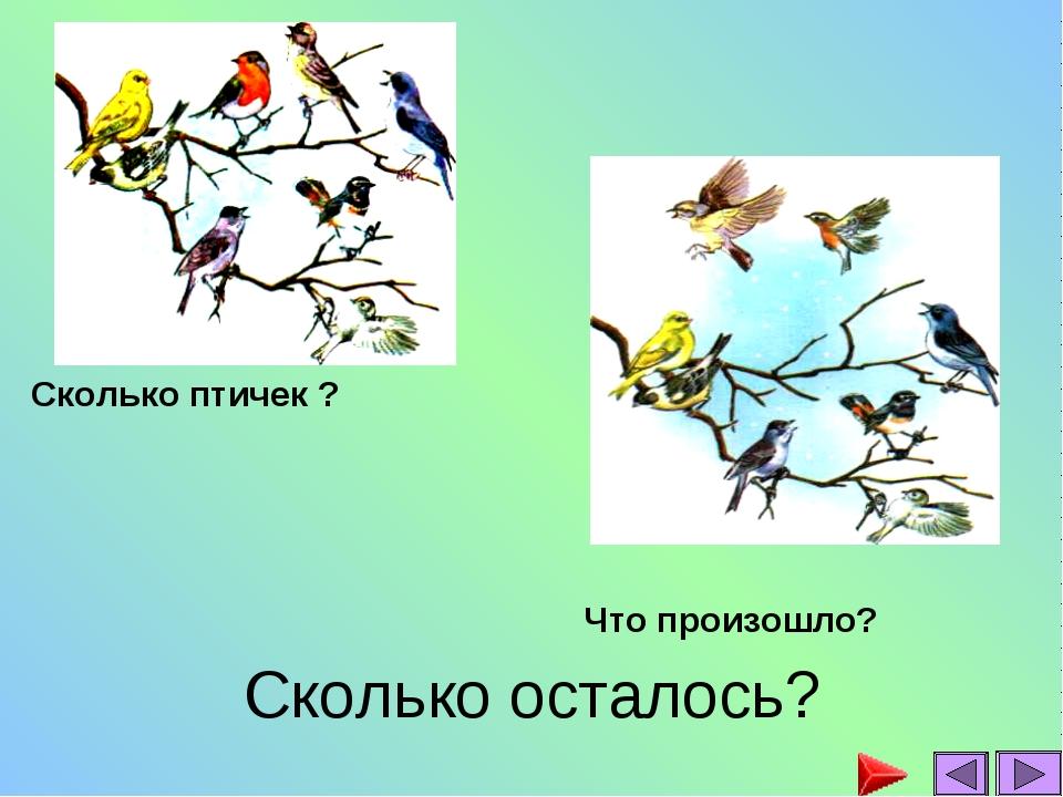 Сколько осталось? Сколько птичек ? Что произошло?