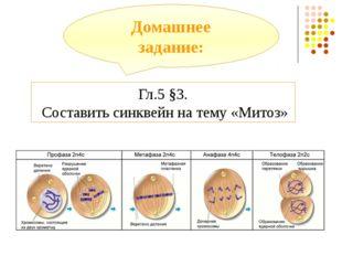 Домашнее задание: Гл.5 §3. Составить синквейн на тему «Митоз»