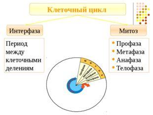 Интерфаза Митоз Клеточный цикл Период между клеточными делениям Профаза Метаф