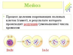 Процесс деления созревающих половых клеток (гамет), в результате которого про