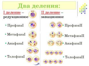 Два деления: I деление – редукционное II деление – эквационное ПрофазаI Профа