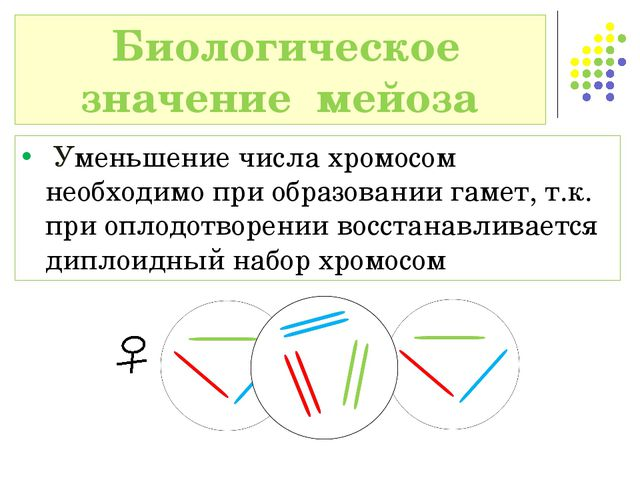 Уменьшение числа хромосом необходимо при образовании гамет, т.к. при оплодот...