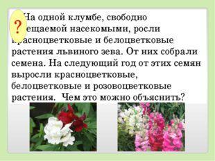 На одной клумбе, свободно посещаемой насекомыми, росли красноцветковые и б