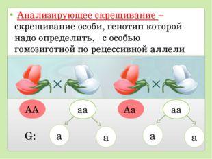 Анализирующее скрещивание – скрещивание особи, генотип которой надо определи