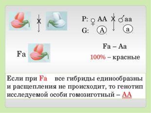 Если при Fа все гибриды единообразны и расщепления не происходит, то генотип