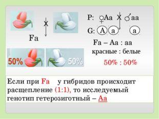 Если при Fа у гибридов происходит расщепление (1:1), то исследуемый генотип г