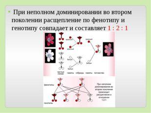 При неполном доминировании во втором поколении расщепление по фенотипу и ген