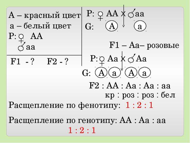 А – красный цвет а – белый цвет Р: АА аа F1 - ? F2 - ? Р: АА Х аа А а F1 – А...