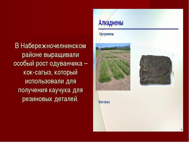 В Набережночелнинском районе выращивали особый рост одуванчика –кок-сагыз, ко...