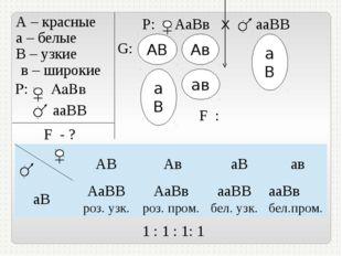 А – красные а – белые В – узкие в – широкие P: АаВв ааВВ F - ? Р: АаВв Х ааВ