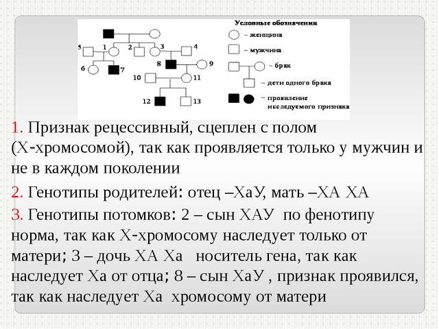 1. Признак рецессивный, сцеплен с полом (Х-хромосомой), так как проявляется т...