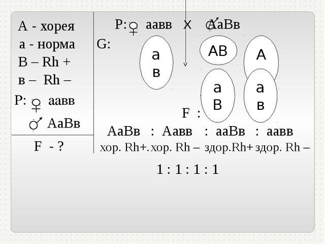 А - хорея а - норма В – Rh + в – Rh – P: аавв АаВв F - ? Р: аавв Х АаВв G: А...