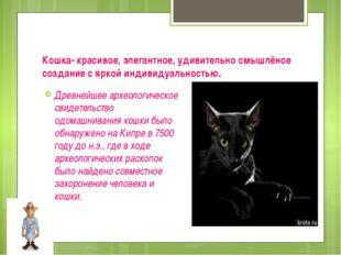 Кошка- красивое, элегантное, удивительно смышлёное создание с яркой индивидуа