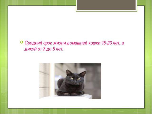 Средний срок жизни домашней кошки 15-20 лет, а дикой от 3 до 5 лет.
