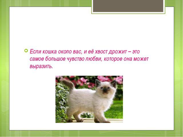 Если кошка около вас, и её хвост дрожит – это самое большое чувство любви, к...