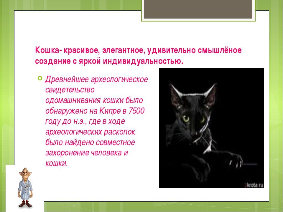 Кошка- красивое, элегантное, удивительно смышлёное создание с яркой индивидуа...