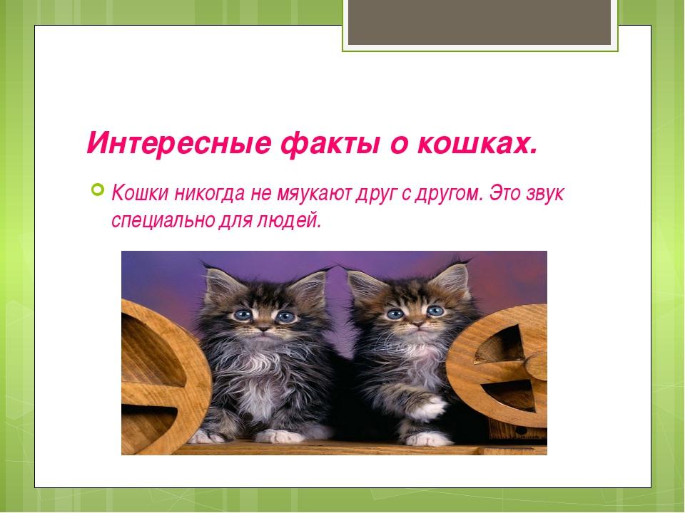 Интересные факты о кошках. Кошки никогда не мяукают друг с другом. Это звук с...
