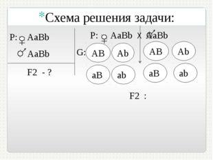 P: AaBb AаВb F2 - ? Р: АaBb Х AаВb G: АB AB F2 : Схема решения задачи: Аb aB