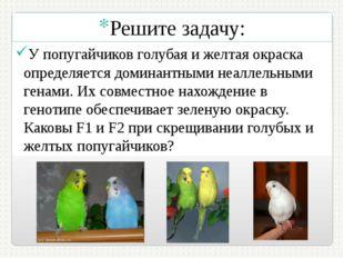 Решите задачу: У попугайчиков голубая и желтая окраска определяется доминантн