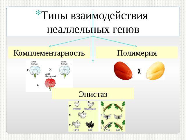 Комплементарность Полимерия Типы взаимодействия неаллельных генов Эпистаз