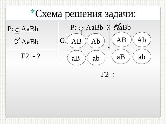 P: AaBb AаВb F2 - ? Р: АaBb Х AаВb G: АB AB F2 : Схема решения задачи: Аb aB...