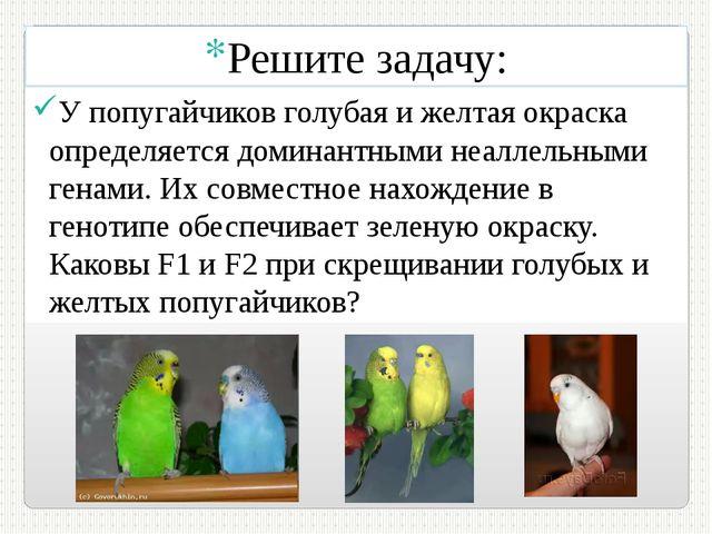 Решите задачу: У попугайчиков голубая и желтая окраска определяется доминантн...