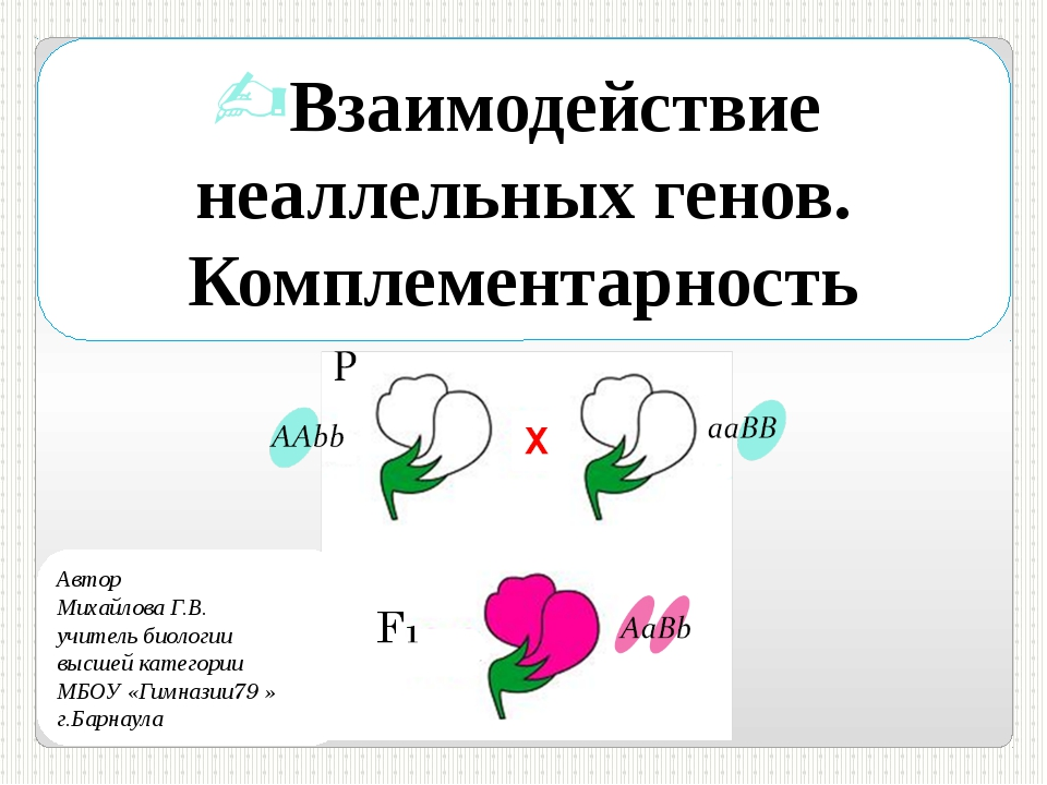 Взаимодействие неаллельных генов. Комплементарность Автор Михайлова Г.В. учит...