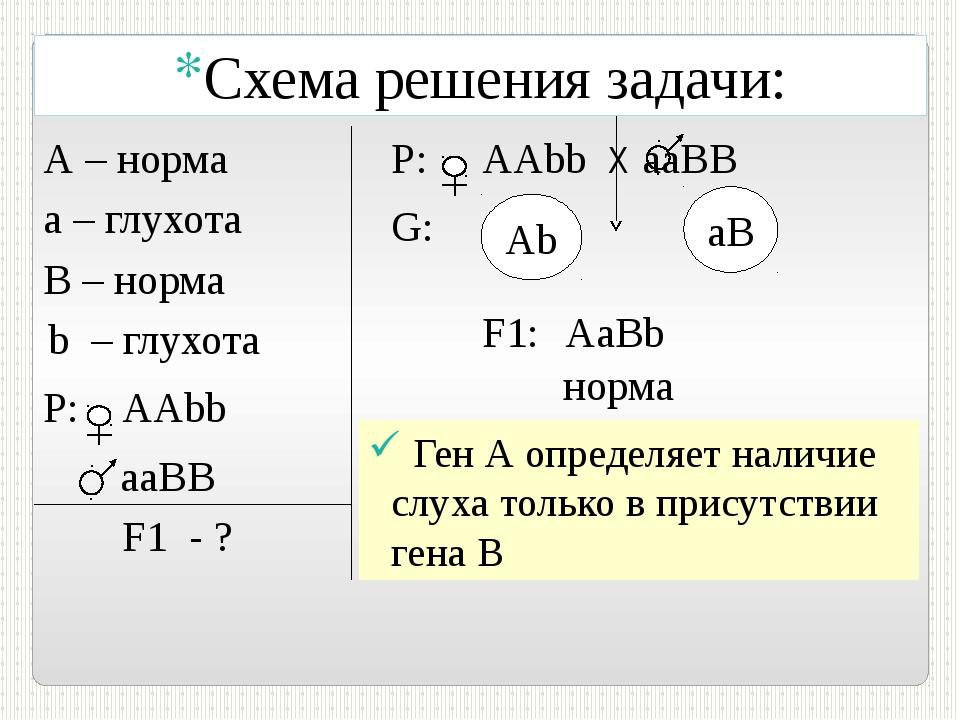 P: AAbb aаВB F1 - ? Р: АAbb Х aаВB G: Аb aB F1: В – норма b – глухота AaBb н...