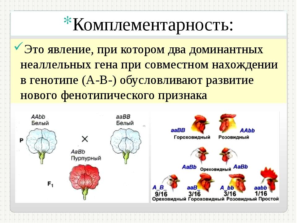 Комплементарность: Это явление, при котором два доминантных неаллельных гена...