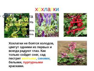 хохлатки Хохлатки не боятся холодов, цветут одними из первых и всегда радуют