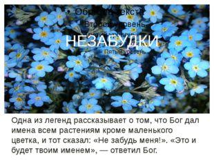незабудки Одна из легенд рассказывает о том, что Бог дал имена всем растениям