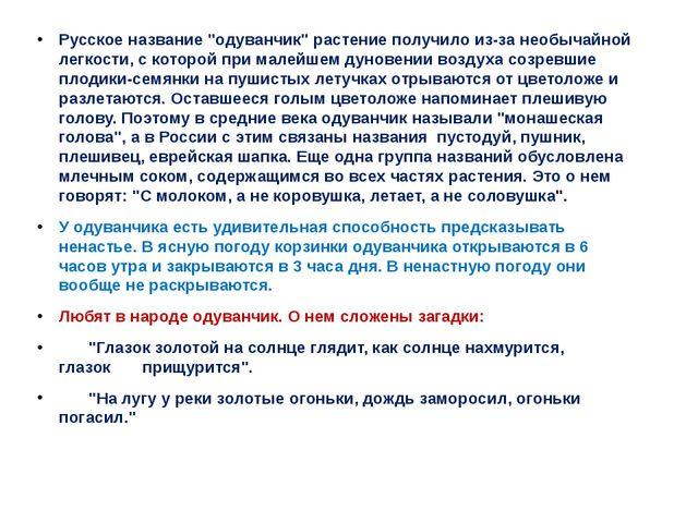 """Русское название """"одуванчик"""" растение получило из-за необычайной легкости, с..."""
