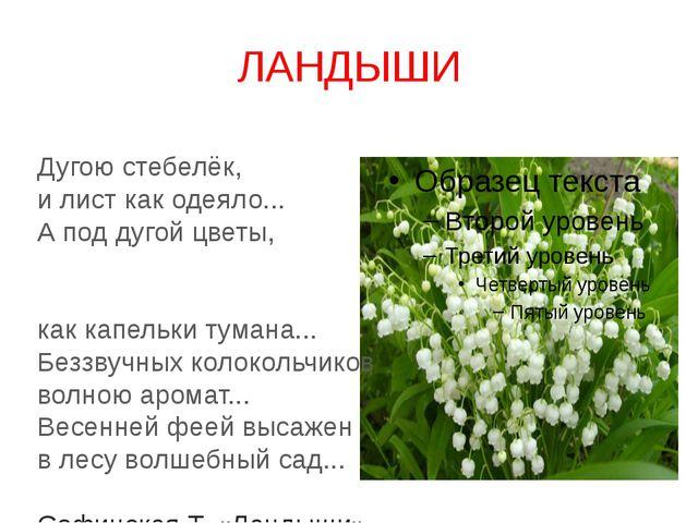 ЛАНДЫШИ Дугою стебелёк, и лист как одеяло... А под дугой цветы, как капельки...