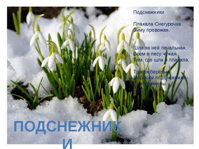 Подснежники Плакала Снегурочка Зиму провожая. Шла за ней печальная, Всем в ле...