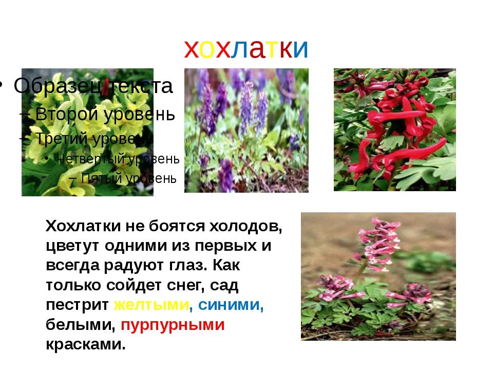 хохлатки Хохлатки не боятся холодов, цветут одними из первых и всегда радуют...