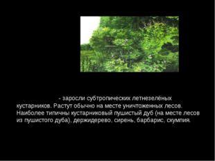 ШИБЛЯ́К - заросли субтропических летнезелёных кустарников. Растут обычно на м