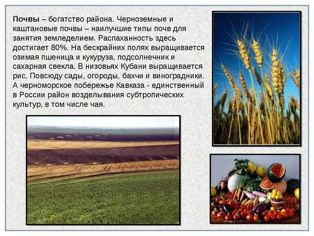 Почвы – богатство района. Черноземные и каштановые почвы – наилучшие типы поч...