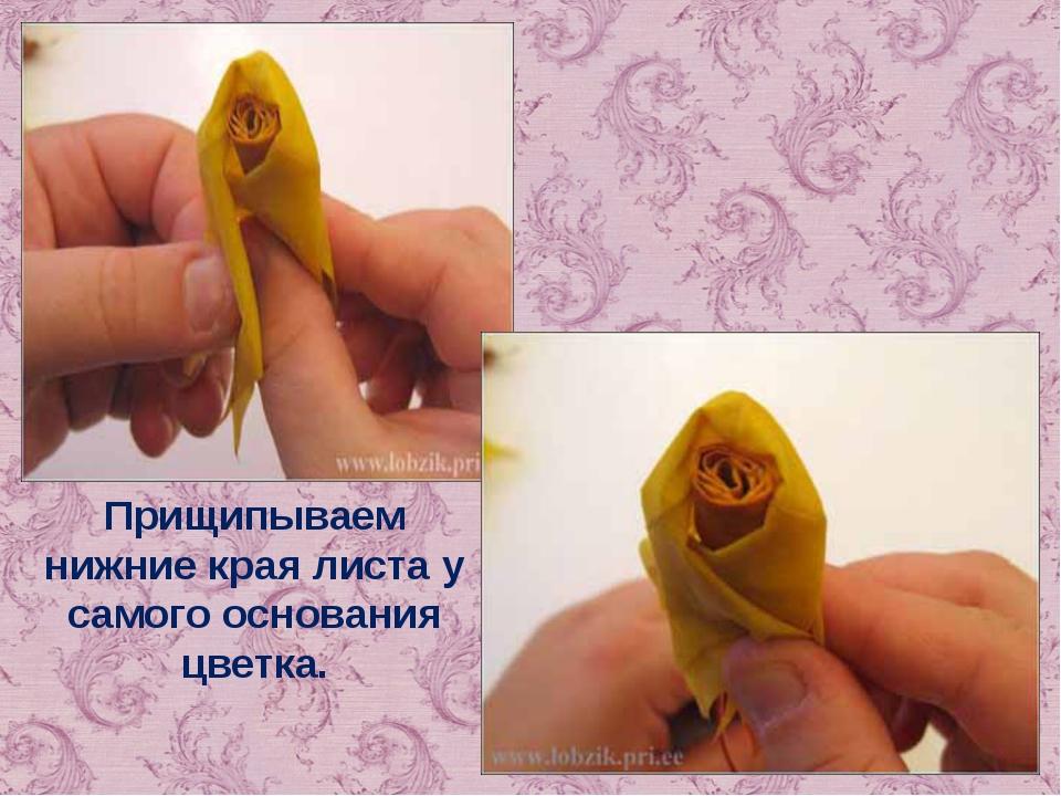Прищипываем нижние края листа у самого основания цветка.