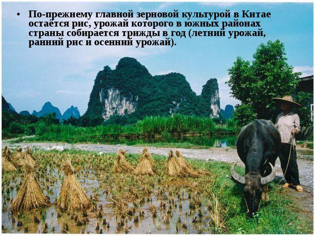 По-прежнему главной зерновой культурой в Китае остаётся рис, урожай которого...
