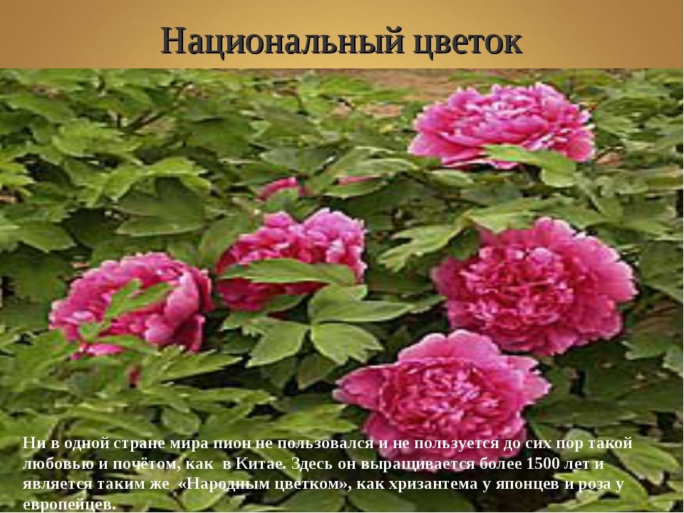 Национальный цветок Shibu lijack Ни в одной стране мира пион не пользовался и...