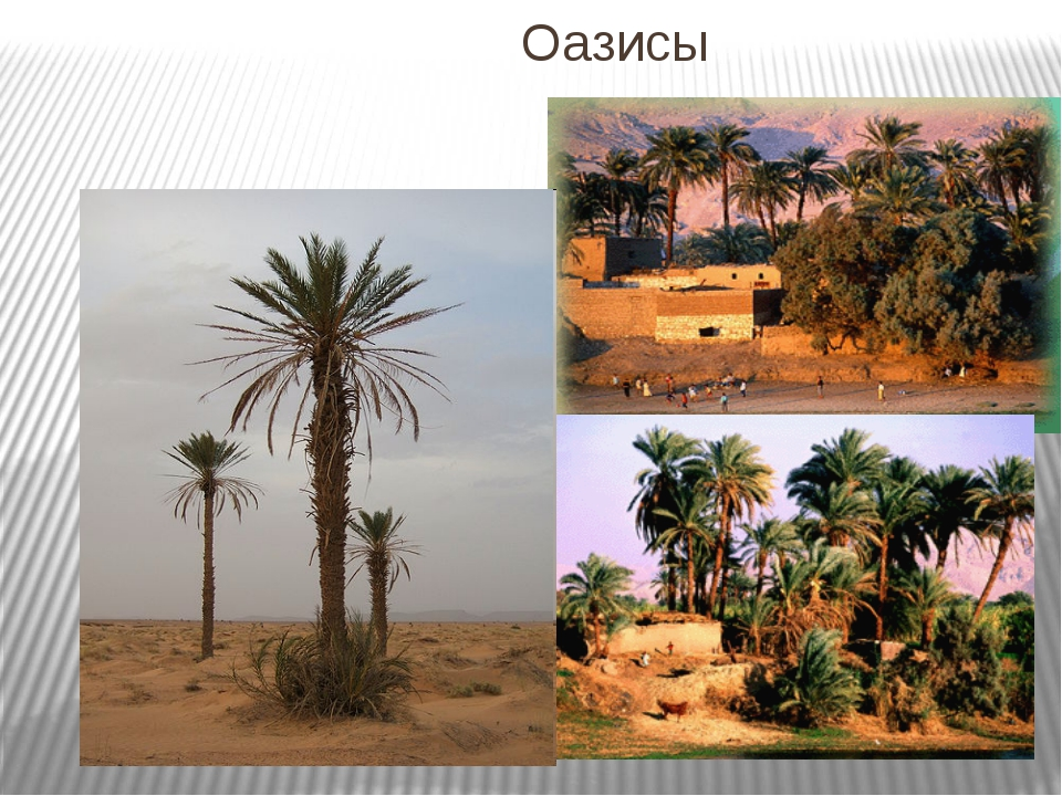 Оазисы
