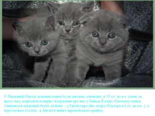 У Південній Європі домашні кішки були завезені, очевидно, в VІ ст. до н.е. (