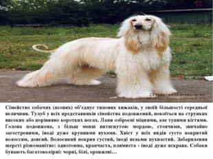 Сімейство собачих (псових) об'єднує типових хижаків, у своїй більшості серед