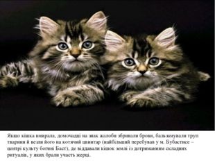 Якщо кішка вмирала, домочадці на знак жалоби збривали брови, бальзамували тр