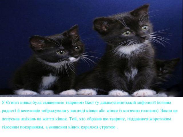 У Єгипті кішка була священною твариною Баст (у давньоєгипетській міфології б...