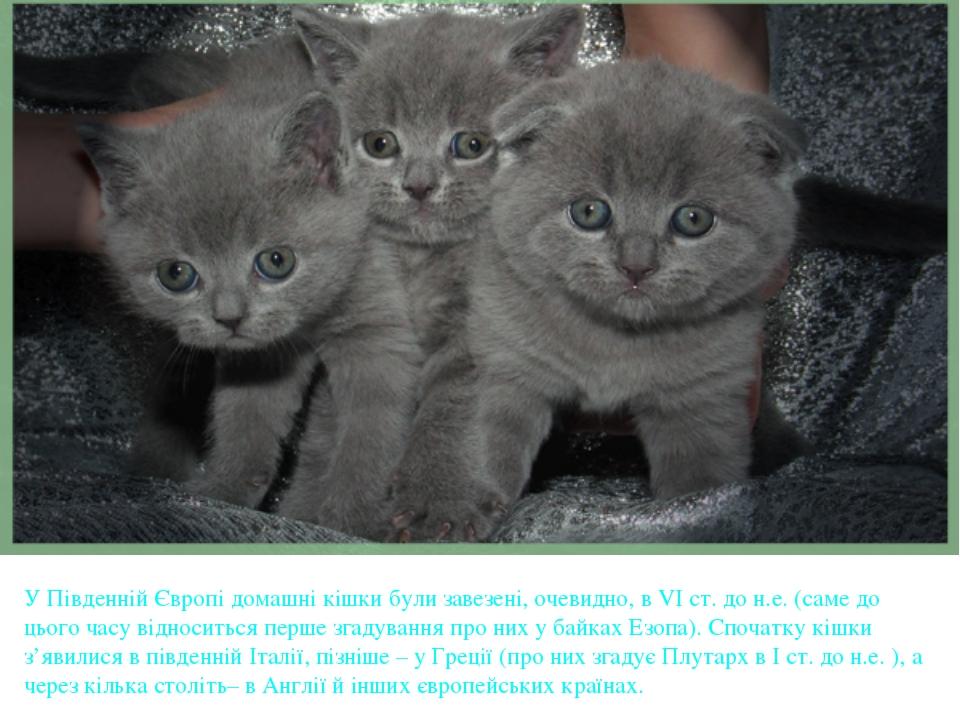 У Південній Європі домашні кішки були завезені, очевидно, в VІ ст. до н.е. (...